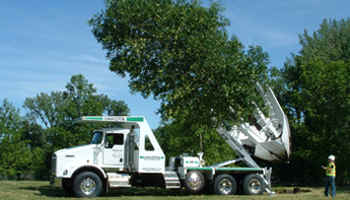 Large Tree Spade in action