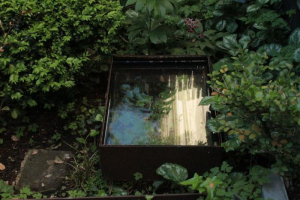 The Mirror Pond creates a dreamy effect against a palette of dark green.